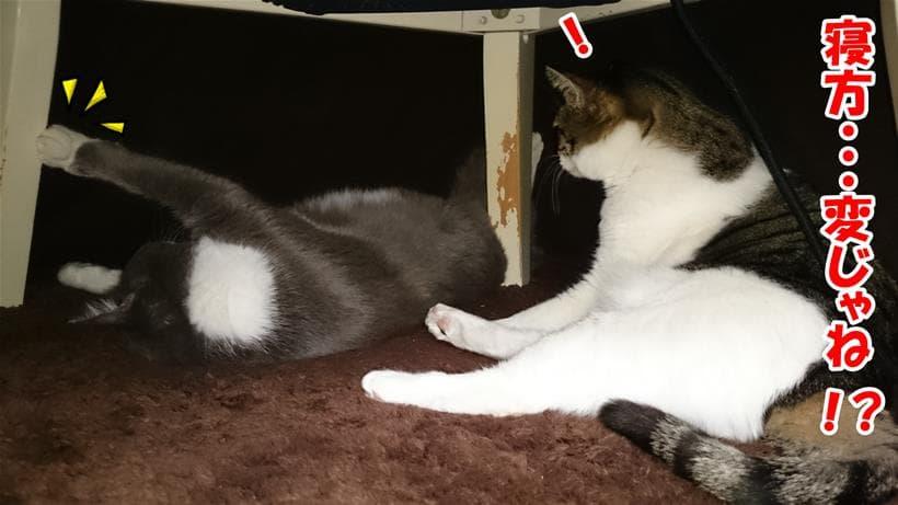 愛猫モコの寝方がおかしい事に気付いた愛猫ミミ
