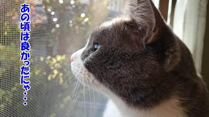 子猫時代を振り返っている体の愛猫モコ