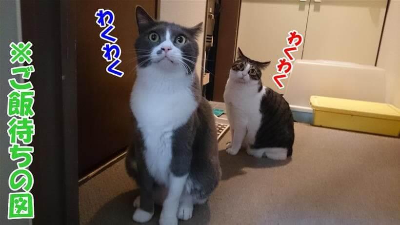 ご飯待ちをしている愛猫たち