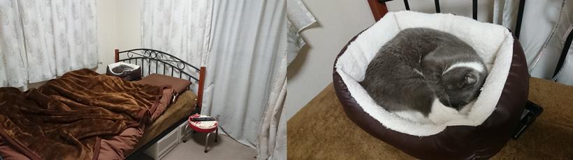 飼い主の枕の横にある冬にだけ出す猫ベットで眠る愛猫モコ