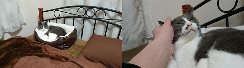 冬は飼い主の横に置いた猫ベッドに入って一緒に寝たがる愛猫モコ