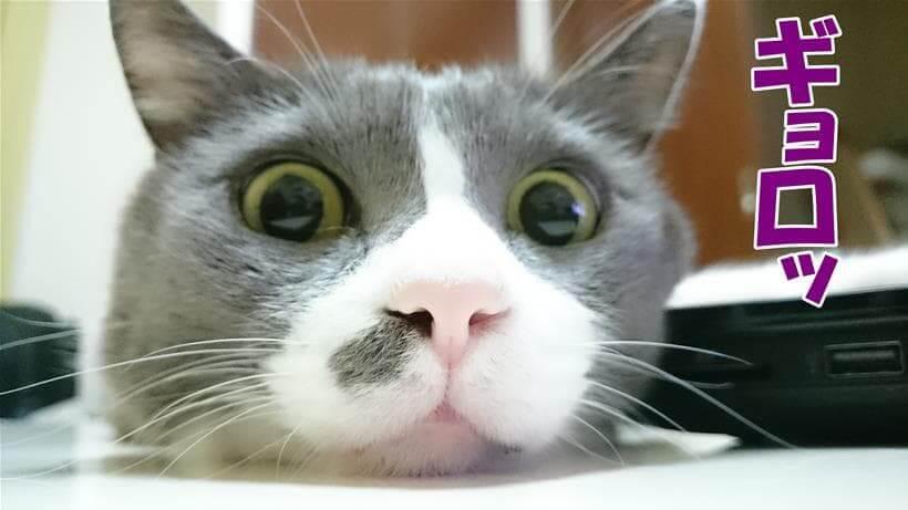 目を見開く愛猫モコ