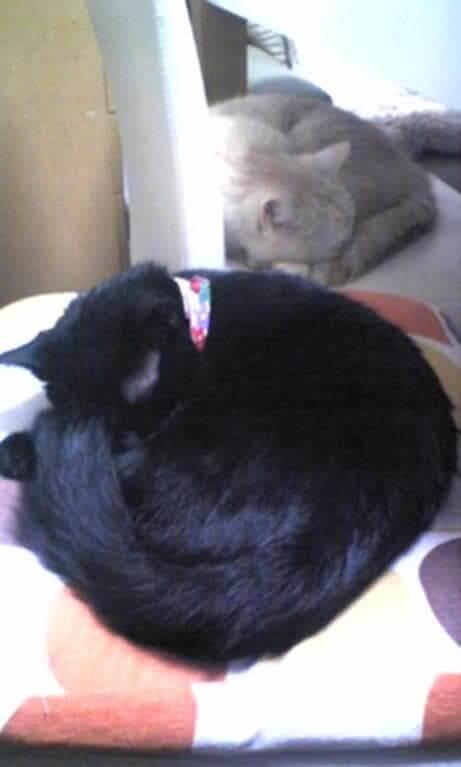 眠る茶トラ猫チャウと黒猫カイくん