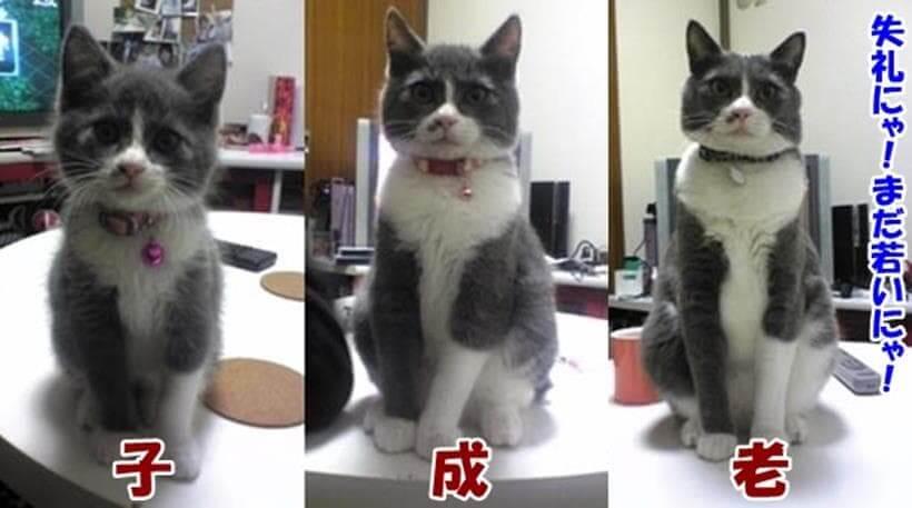 愛猫モコの子猫期・成猫期・シニア期