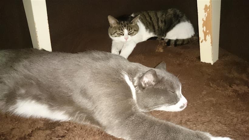 出した途端にこたつに入り浸る愛猫モコとミミ①