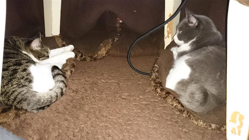 こたつの端に位置するこたつ布団の折り返しに乗っかる愛猫たち