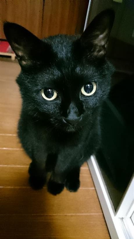 ちょこんと座っている実家の黒猫カイくん