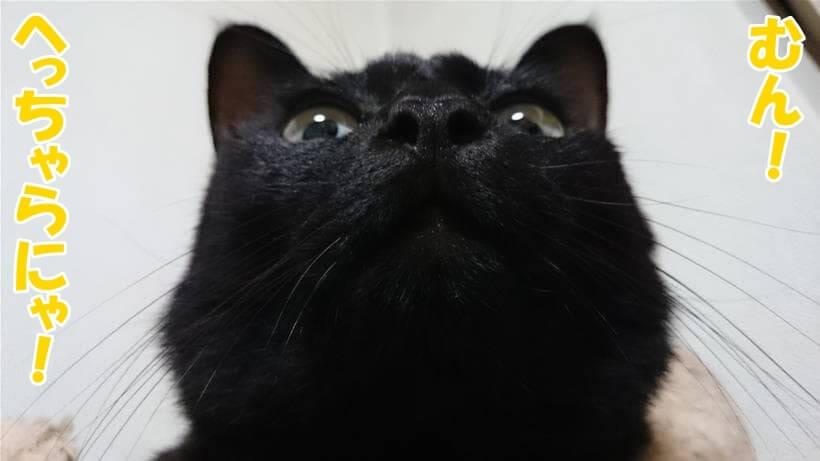 首を傾げたままだってへっちゃらだい!と言っている体の実家の黒猫カイくん
