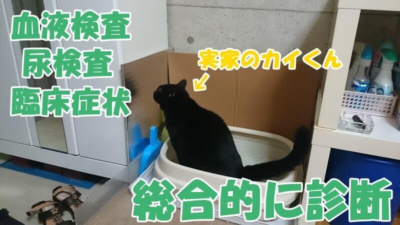 おしっこしている実家の黒猫カイくん