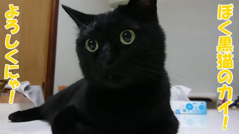 目が真ん丸状態の実家の黒猫カイくん