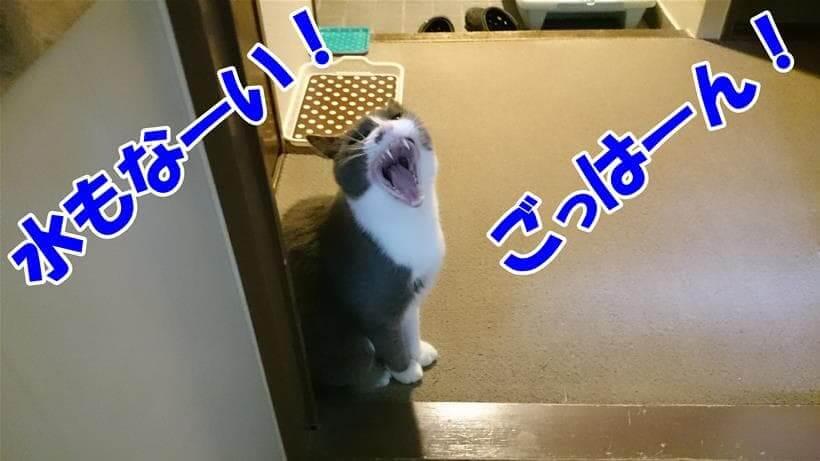 ご飯や飲み水を求めて叫んでいる体の愛猫モコ
