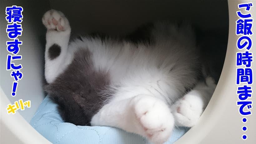 食事の時間まで寝るという体の愛猫モコ