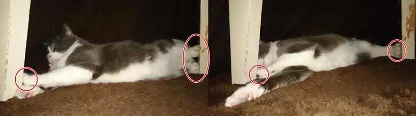 こたつの足で手足を突っ張る愛猫モコ①