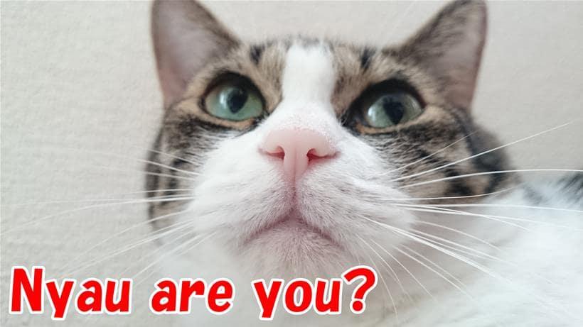 英語を話している体の愛猫ミミ