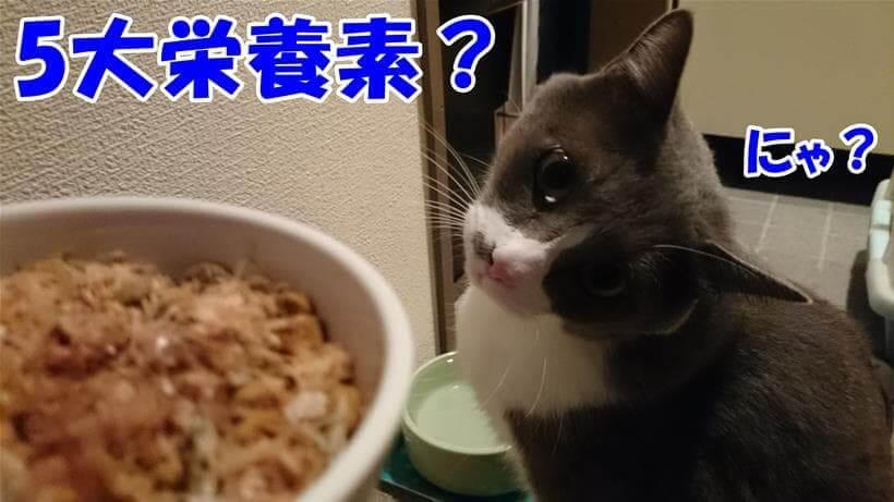 五大栄養素について考える体の愛猫モコ