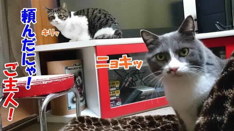 健康管理と早期発見を飼い主に頼る愛猫たち