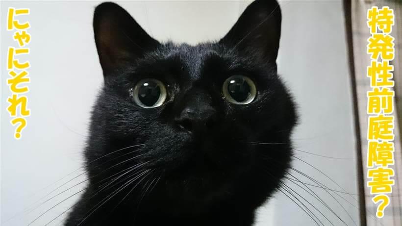 自分が特発性前庭障害と聞いて不思議な顔をしている体の実家の黒猫カイくん