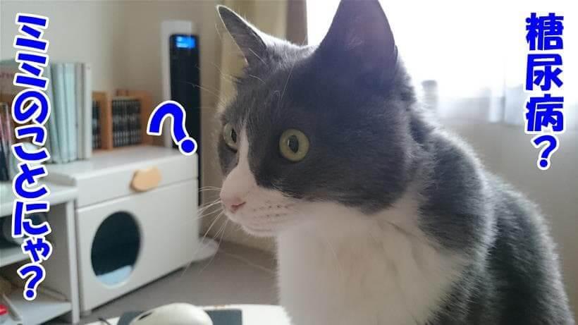 糖尿病と言えばミミの事だと思っている体の愛猫モコ(ミミは太ってるけど糖尿病ではありません)