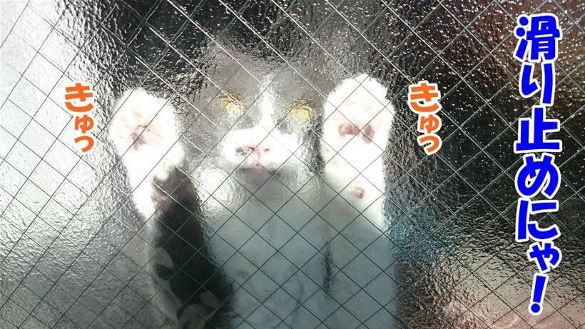 肉球をガラスにピタッと張り付けて滑らないようにしている愛猫モコ