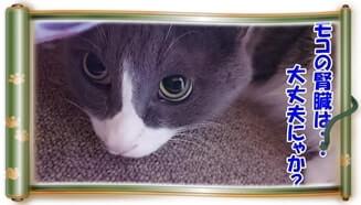 自分の腎臓が大丈夫なのか不安に思う体の愛猫モコ(巻物Ver.)