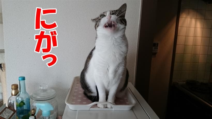 苦いと顔をゆがめている愛猫ミミ