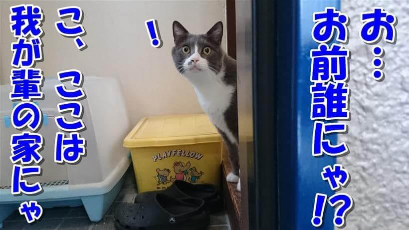 玄関でここは自分の家だと主張する愛猫モコ