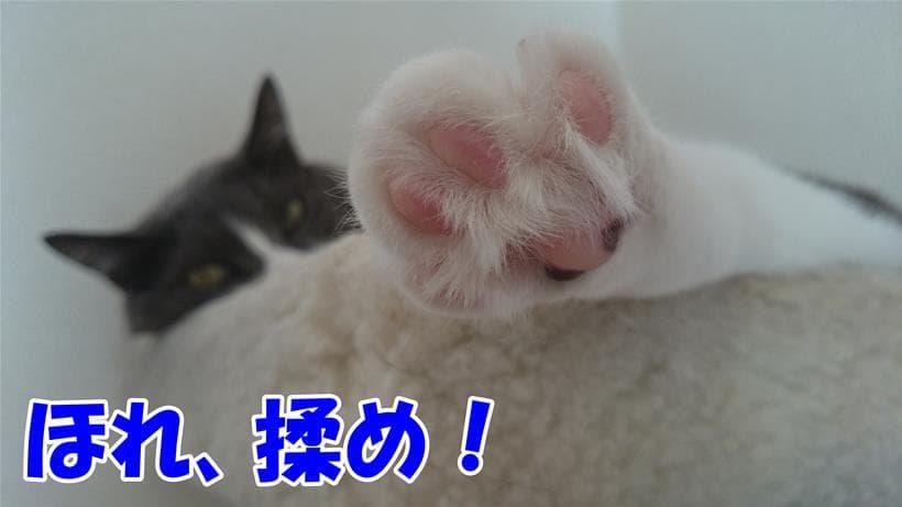 揉め!と肉球を差し出してくる体の愛猫モコ