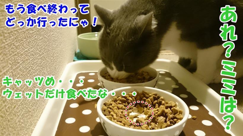 大好きなウェットだけ早食いして姿をした愛猫ミミとは違い、ゆっくり食べる愛猫モコ