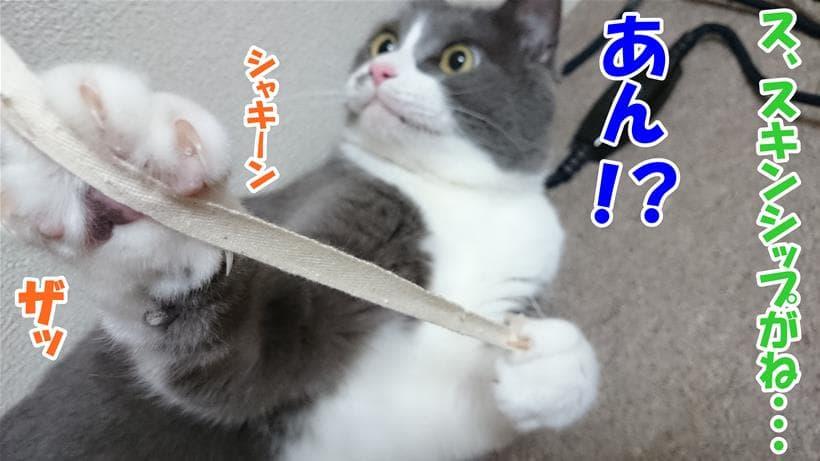 スキンシップが喧嘩腰な愛猫モコ