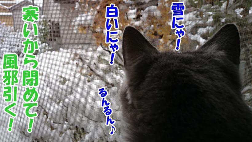 寒いのに窓を開けて積もった雪を眺めている愛猫モコ