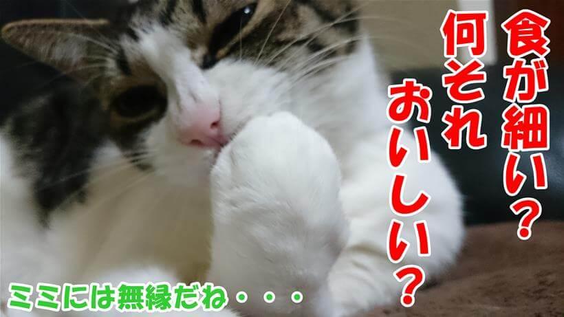 食が細いなんて無縁の愛猫ミミ
