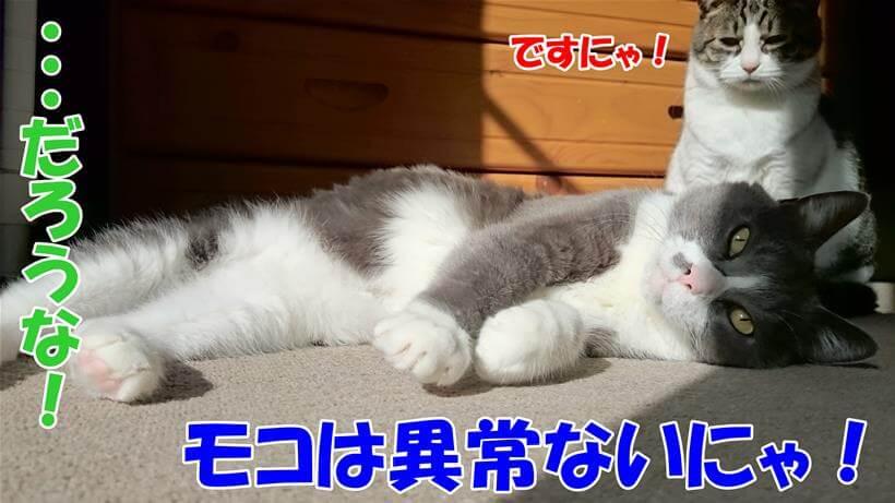 排便に異常はないと言っている体の愛猫たち