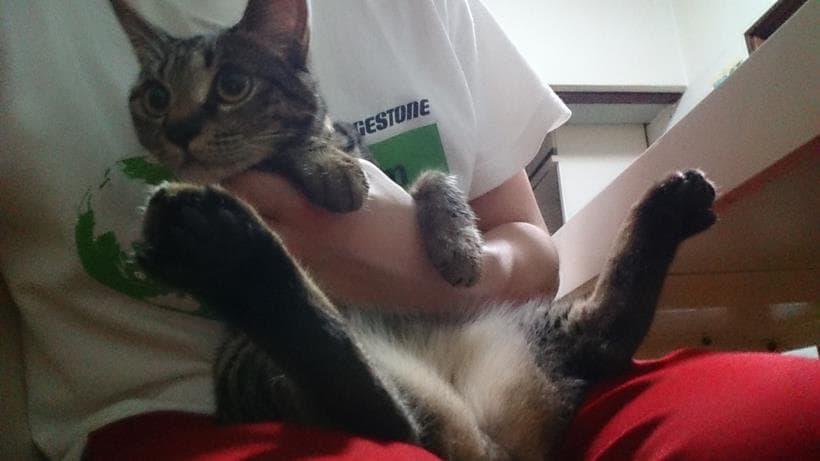 僕に抱っこされる実家のキジトラ猫ココちゃん