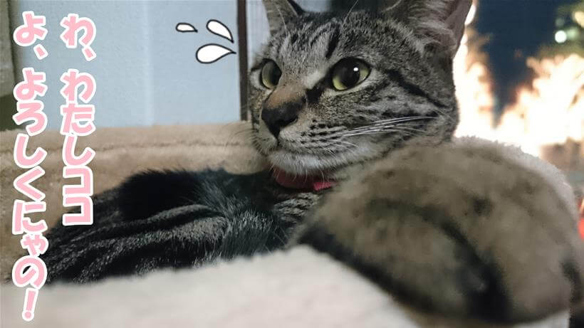 キャットタワーで寛ぐ実家のキジトラ猫ココちゃん