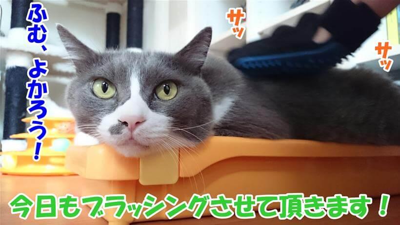 爪研ぎ台の上でブラッシングされる愛猫モコ