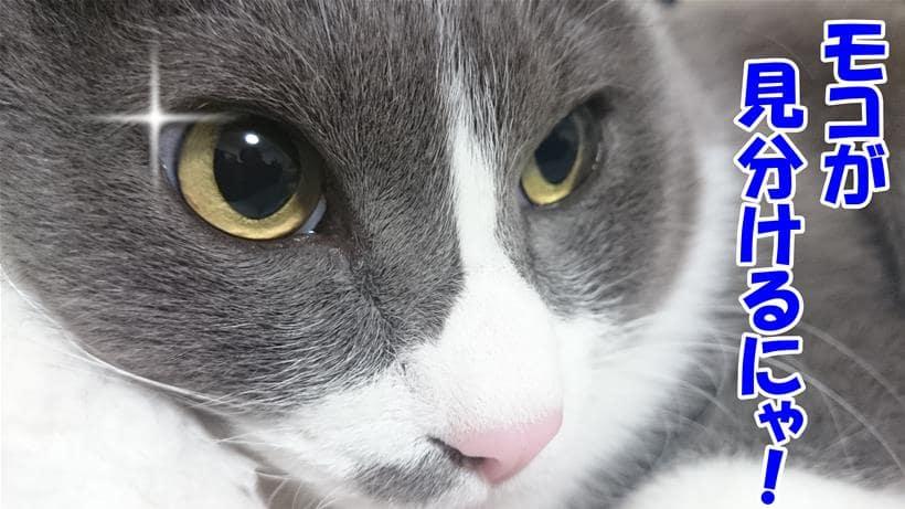 自分で見分けると言って目を光らせている体の愛猫モコ