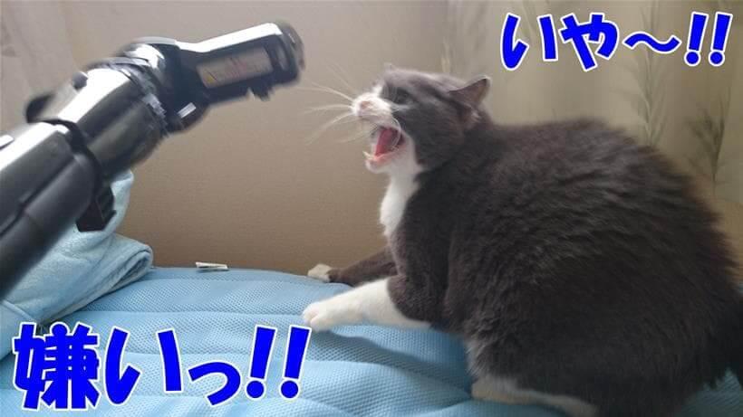 掃除機が大嫌いな愛猫モコ