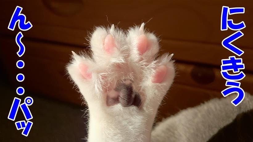 愛猫モコの肉球(後ろ足)
