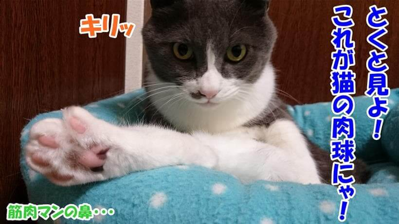 猫の肉球を見せつけている体の愛猫モコ