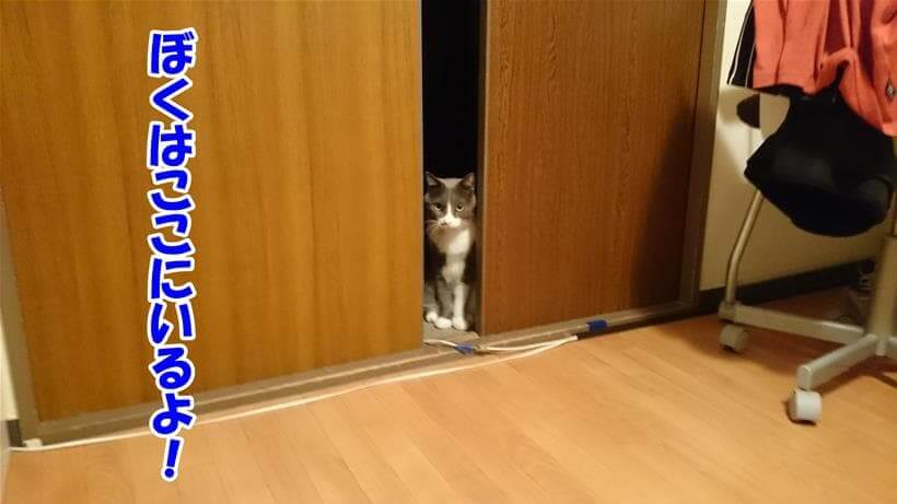 自分はココにいると扉の間からアピールする愛猫モコ
