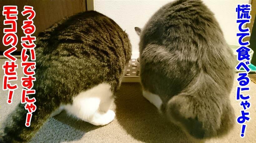 食事中に慌てずに食べろと言っている体の愛猫モコに対して、反抗的な態度をとっている体の愛猫ミミ