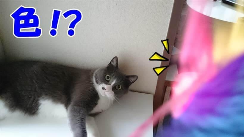 カラフルな物体(おもちゃ)に興味津々な猫