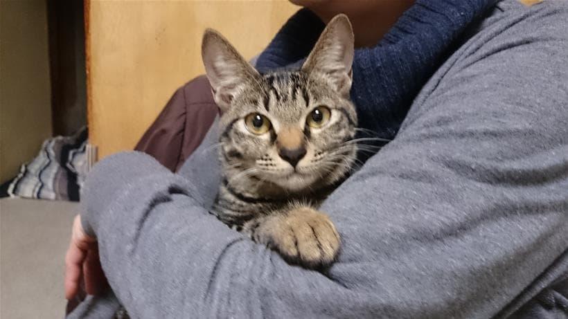 僕の母に抱っこされている実家のキジトラ猫ココちゃん③