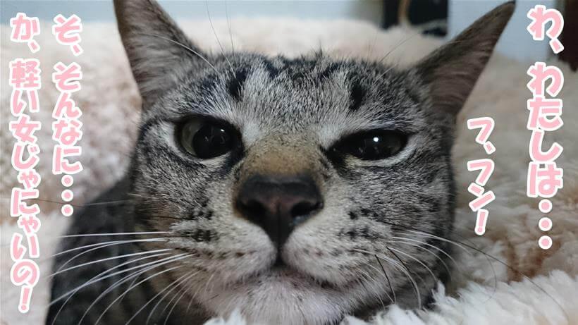 そんなに軽い女じゃないのよと言わんばかりの顔をしている実家のキジトラ猫ココちゃん