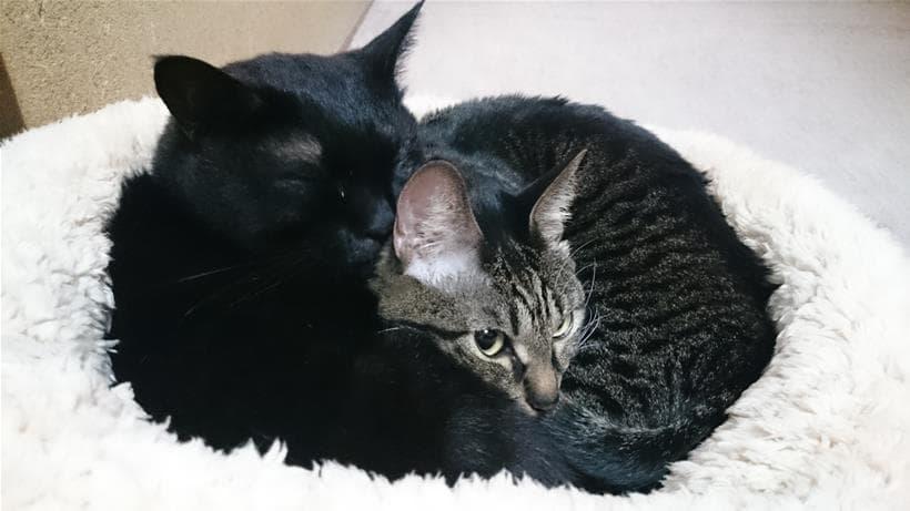 猫ベッドで寄り添って寝る実家の猫たち