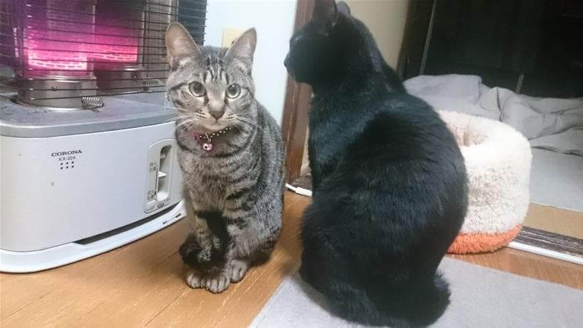 一緒に仲良くストーブで暖を取る実家の黒猫カイ&キジトラ猫ココ②