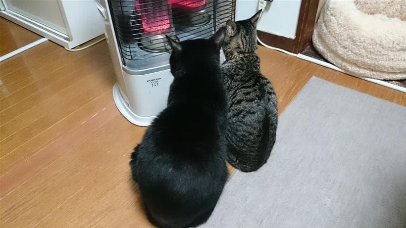 一緒に仲良くストーブで暖を取る実家の黒猫カイ&キジトラ猫ココ③
