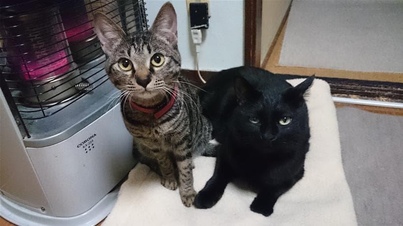 一緒に仲良くストーブで暖を取る実家の黒猫カイ&キジトラ猫ココ①