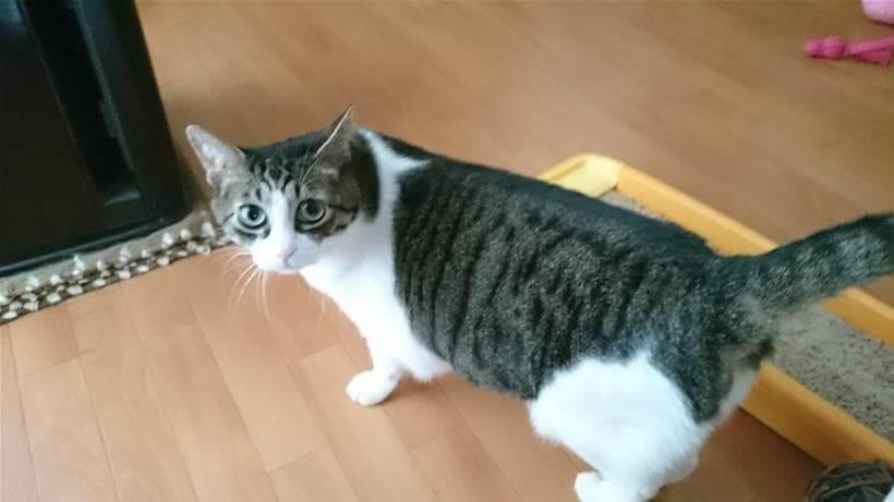 迷惑している愛猫ミミ
