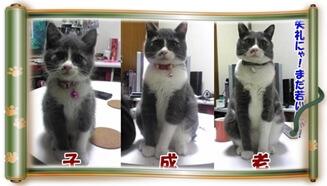 愛猫モコの子猫期・成猫期・シニア期(巻物Ver.)